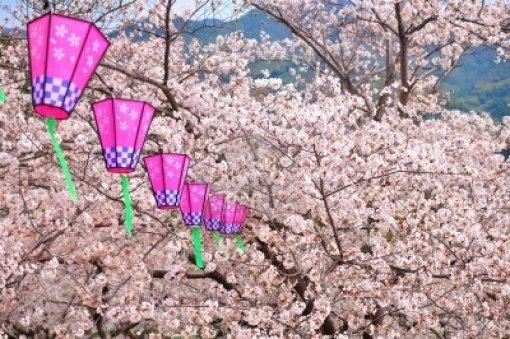 9774159-flor-de-sakura-y-linterna-de-japones